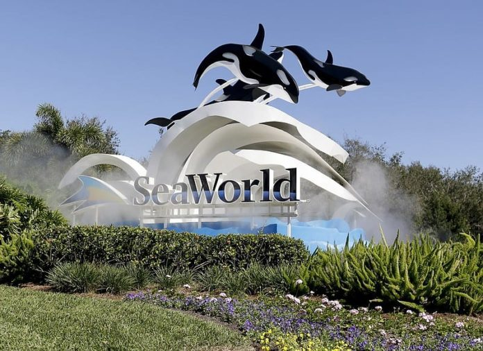 Former SeaWorld lawyer pleads guilty to insider trading 2